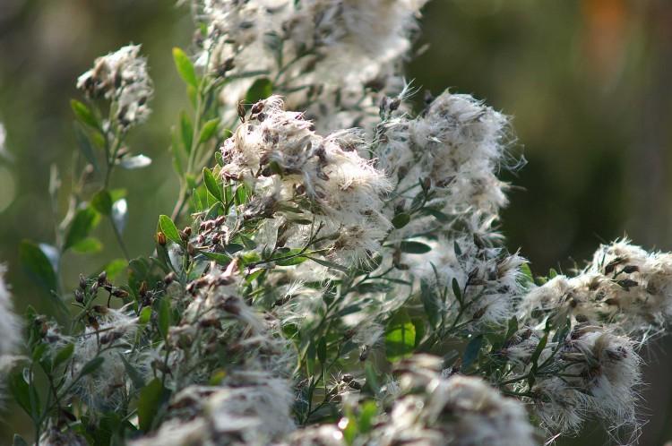 fotka nesklizené bio bavlny