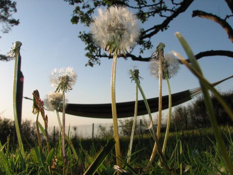 Jarní louka se zahradní houpačkou a pampeliškami