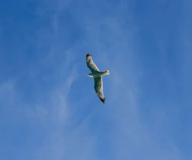fotka racka na letní modré obloze