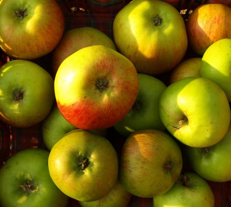 Prosluněná fotografie podzimní sklizně jablek