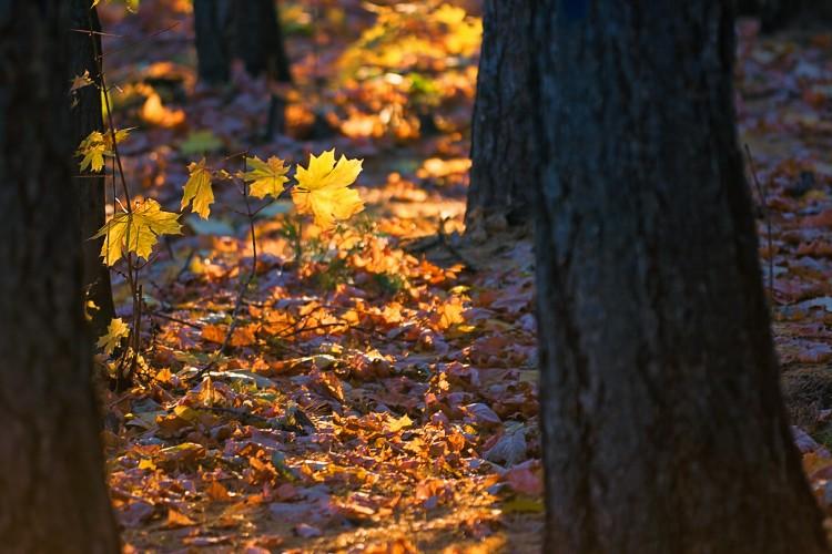 Fotografie podzimního listí v parku