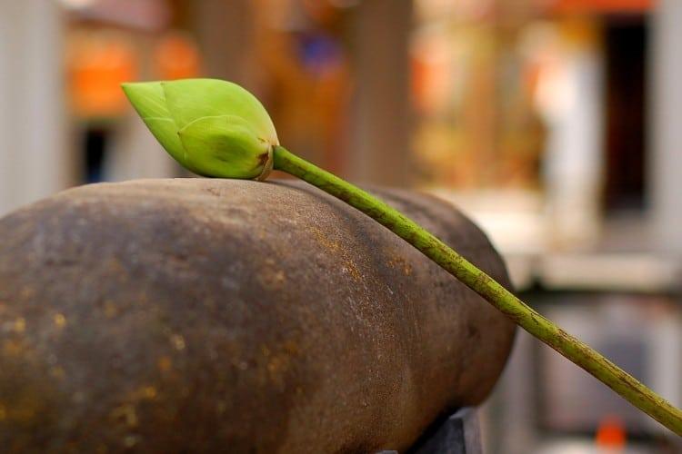 Lotosový list na velkém kameni