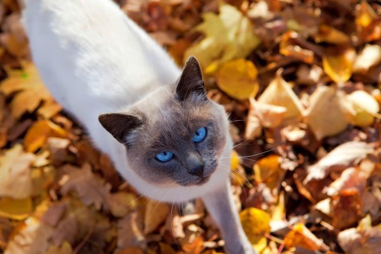Kočka se prochází v podzimním listí