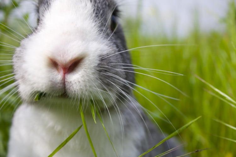 Pozice králíka proti vypadávání vlasů