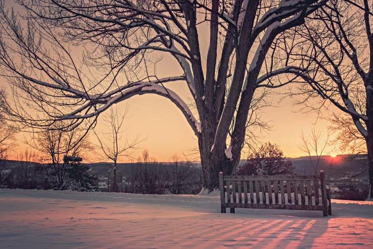 Zimní krajina se stromem a lavičkou