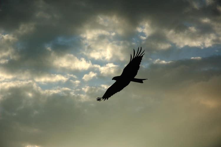 Orel letící zataženou oblohou