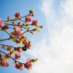 Březen – měsíc ve znamení jógy a detoxikace