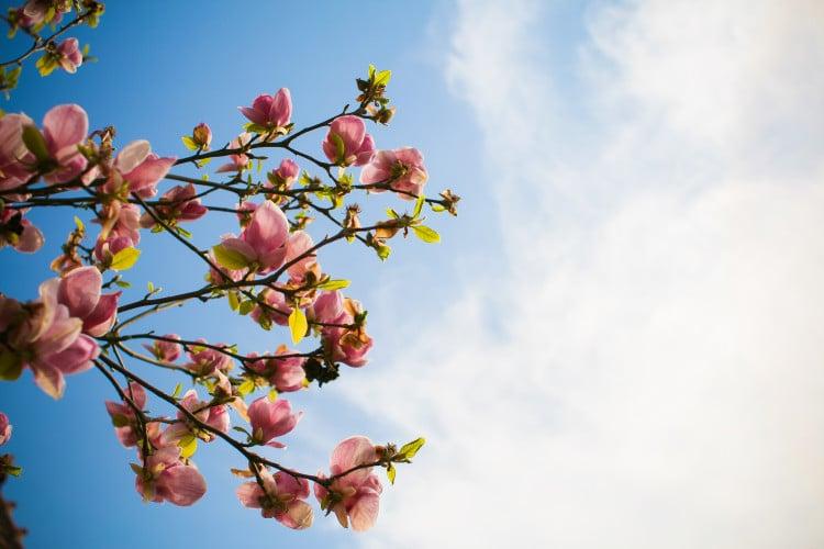 Jarní kvetoucí strom