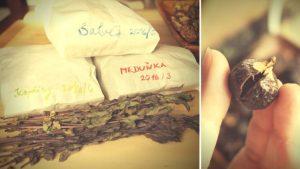mydlove orechy