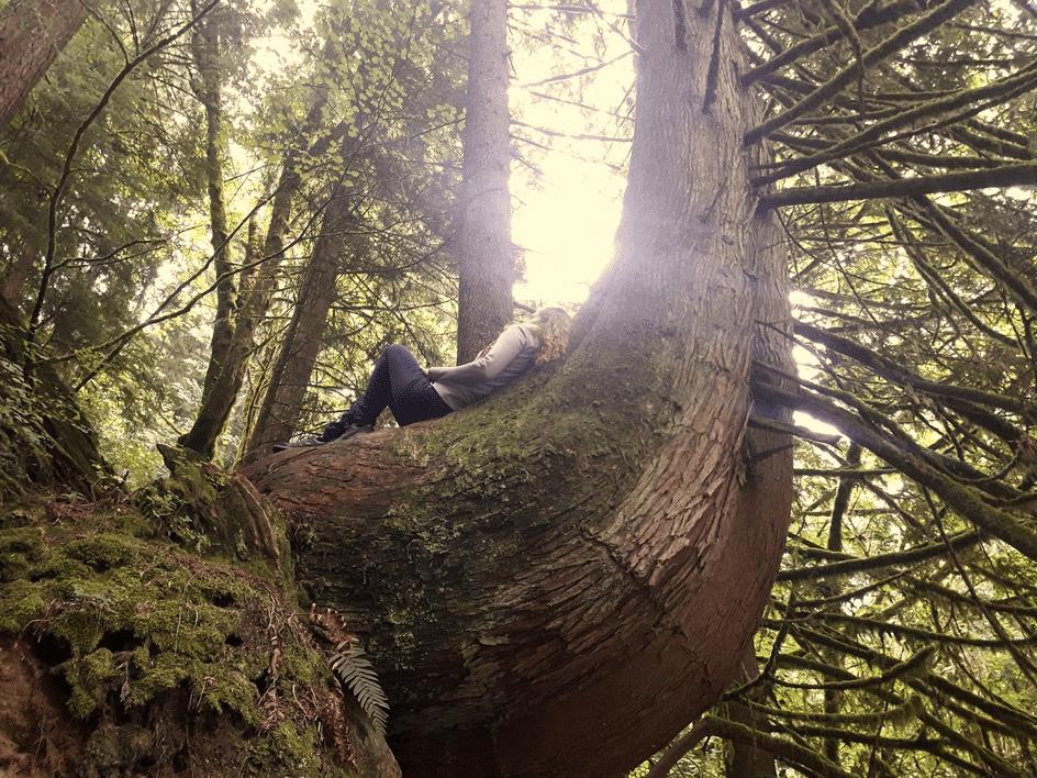 žena sedící na stromě