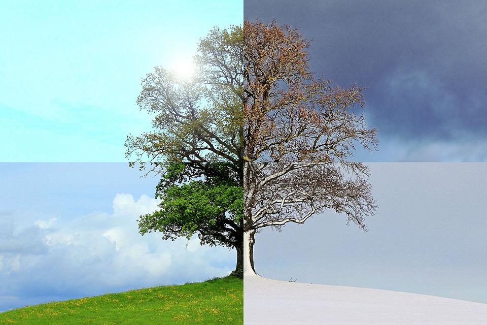 strom v cyklu